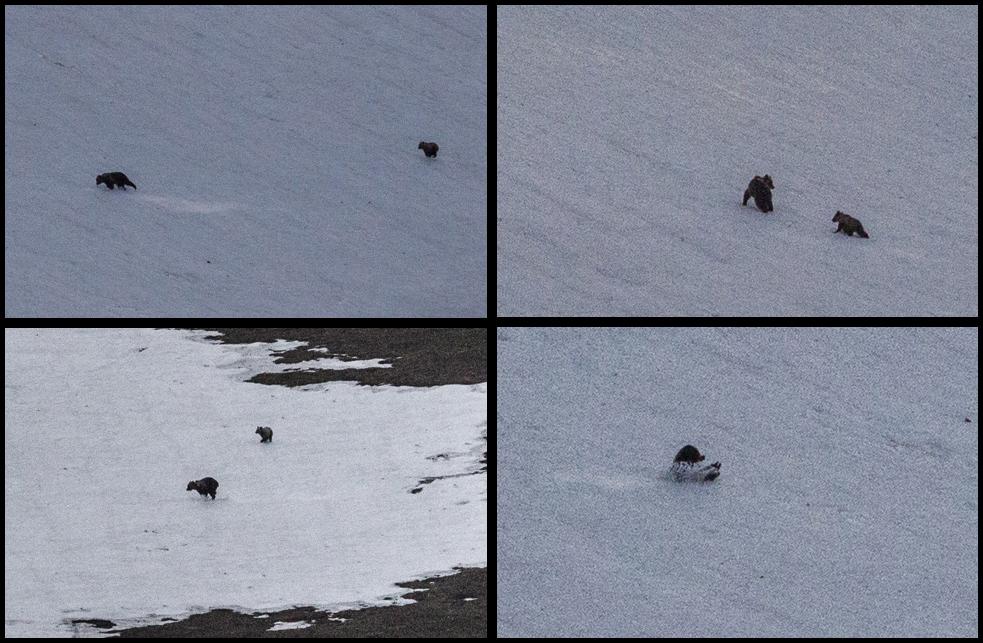 photo bears.jpg
